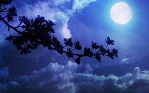 mesic-a-kvetina-mala