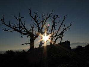 strom-a-stin-maly